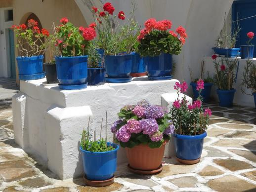 potted plants in Naxos Town