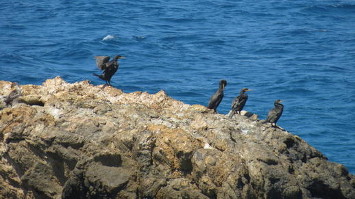 birds on Naxos