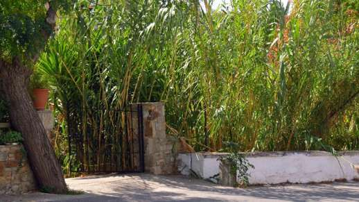 bamboo in Chalki