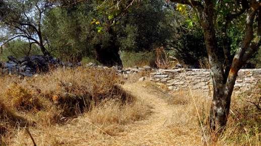 a yard in Chalki