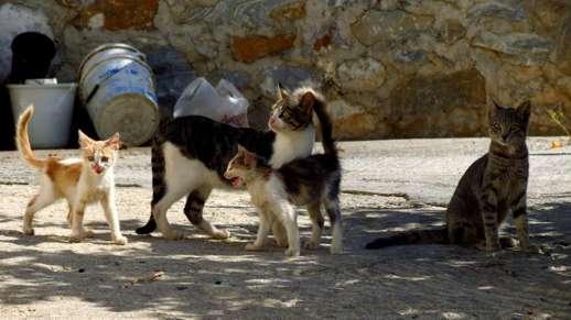 cats in Filoti