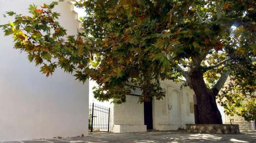 fall foliage in Chalki