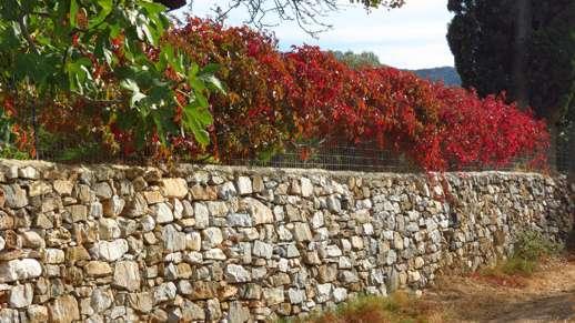 fall foliage in Filoti