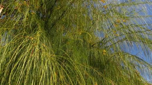 greenery in Filoti