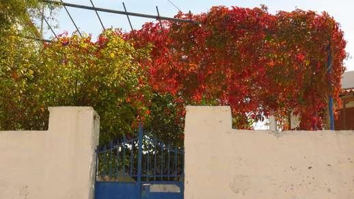 fall foliage in Kerami