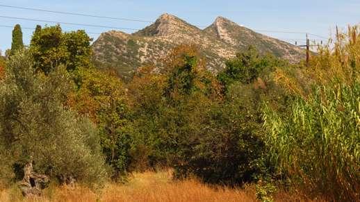 fall foliage on Naxos