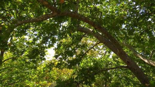 trees in Filoti