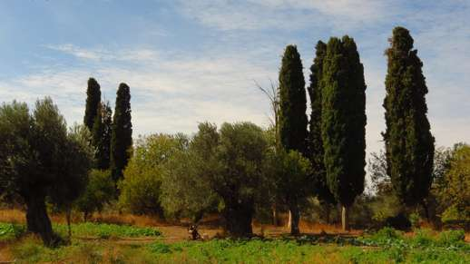 trees in a field near Chalki