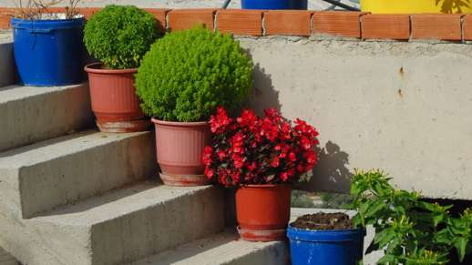 potted plants in Filoti