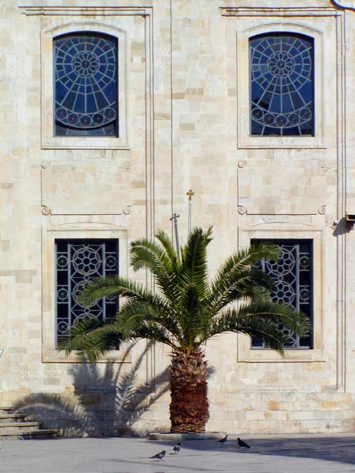 palm tree in Heraklion