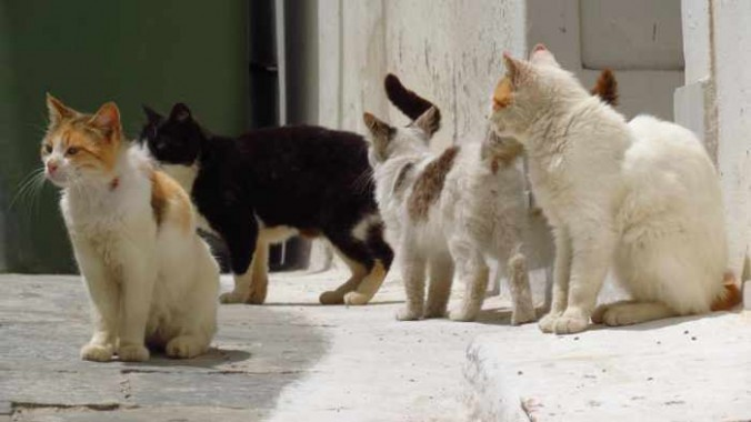 cats in a lane in Andros Town