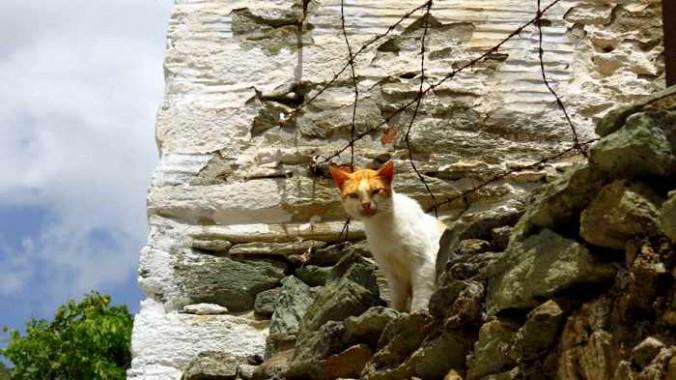 a cat in Stenies