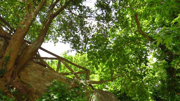 canopy of trees at Menites