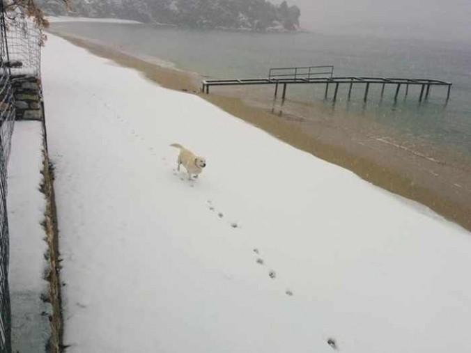 Snow at Achliadas Skiathos photo shared on Facebook by Sakis Zlatoudis