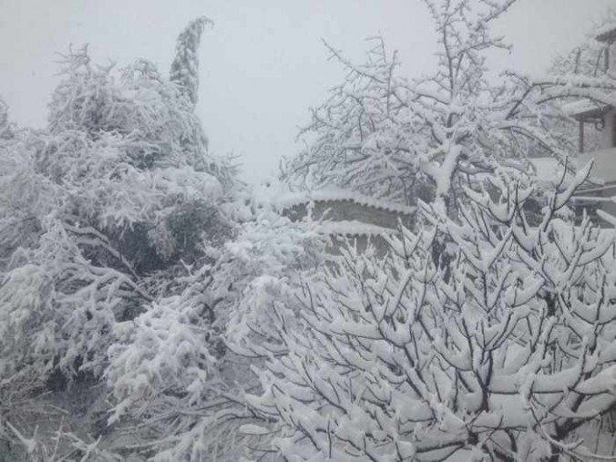 Snow covered trees on Skiathos photographed by Girogos Diolettas