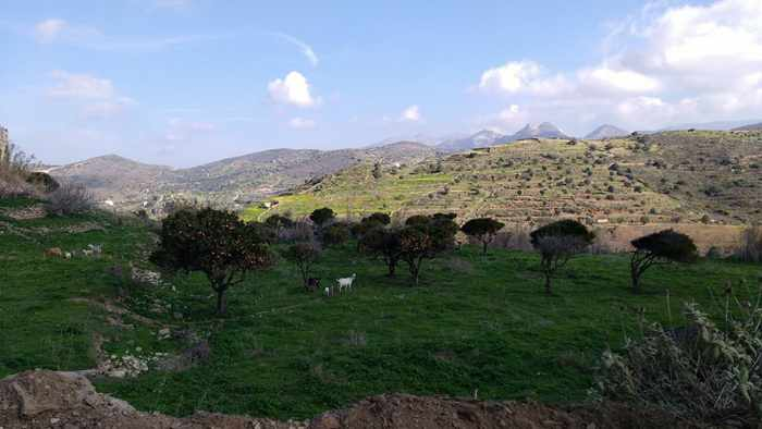 Lianos Village hotel photo of countryside near Agia Mamas church Naxos
