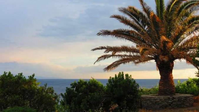 palm tree atop the coastal cliffs at Stivari