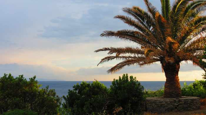palm tree atop the coastal cliffs at Stivari
