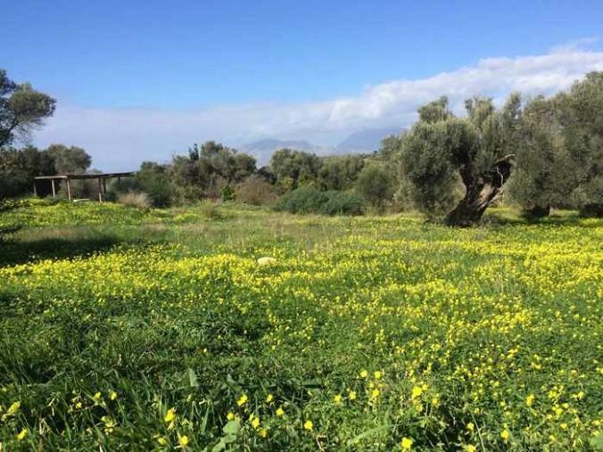 a field near Kamilari Crete
