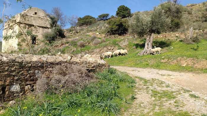 Lianos Village Hotel photo of the Jesuits Palace at Kalamitsia Naxos