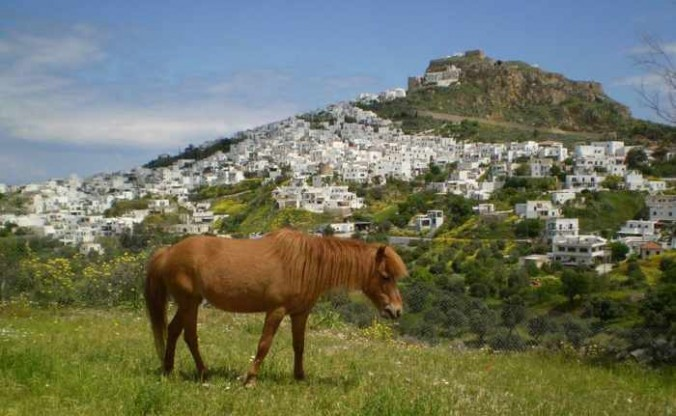 Skyros pony photo from the Syros municipal website