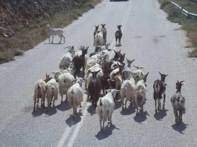 Mike Andrew photo of goats on a road on Naxos