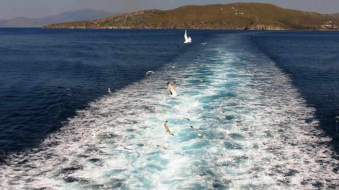 seagulls following Superferry II