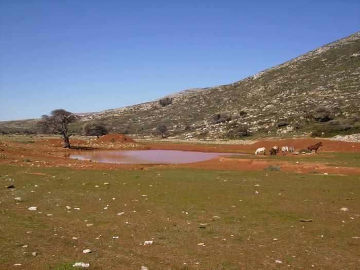 Aris Plateau Skyros