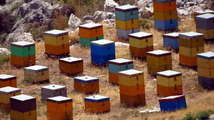 beehives at Karathona