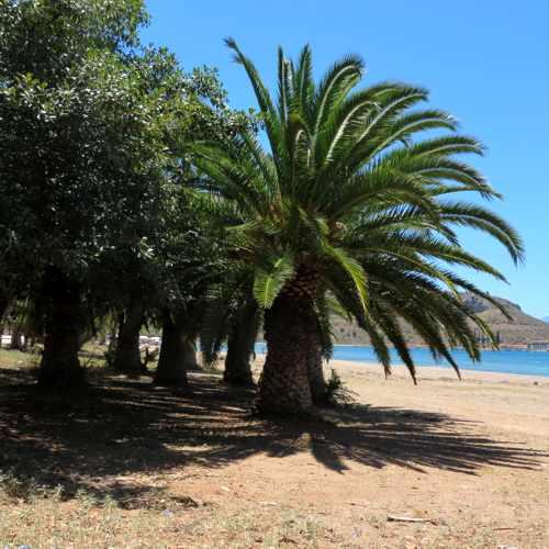 palm trees on Karathona beach