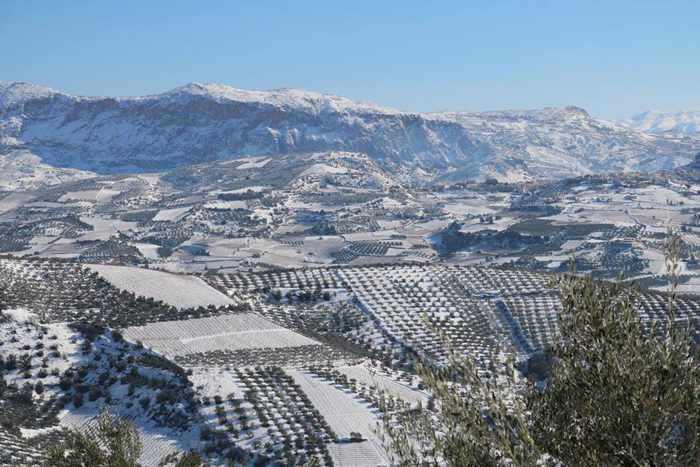 Douloufakis Cretan Winery vineyard under snow