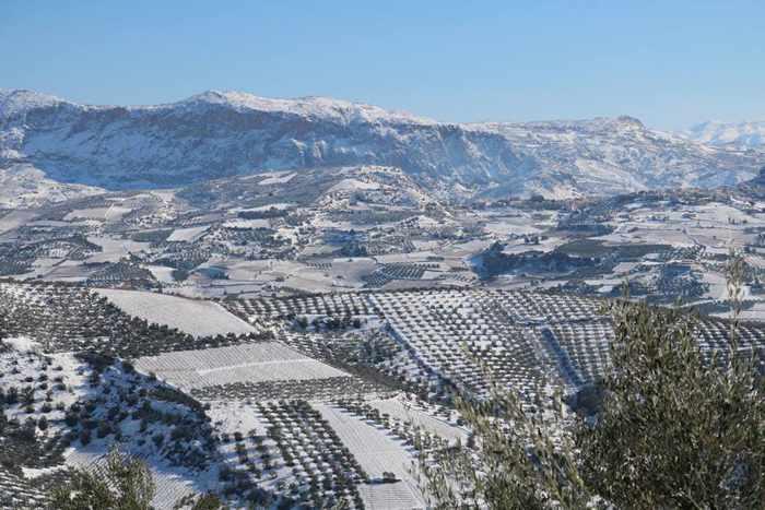 Douloufakis Cretan Winery vineyard under snow