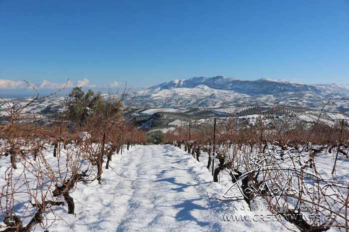 Snow at Douloufakis Cretan Winery on Crete