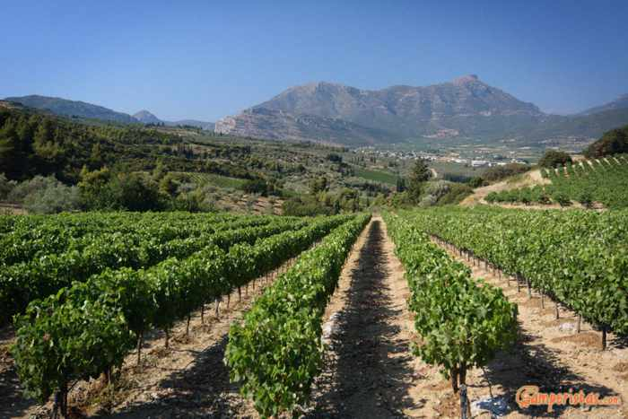 Vineyards in the Nemea region of the Peloponnese