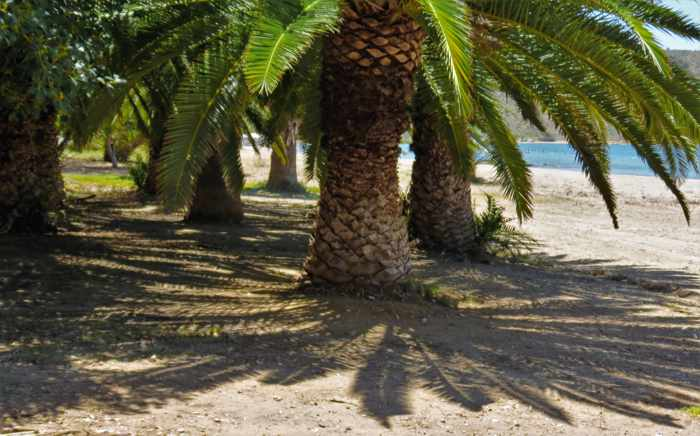palm trees on Karathona beach