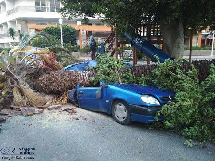 Toppled tree in Rhodes Town