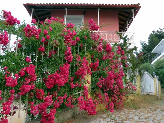 a house in Katakolo