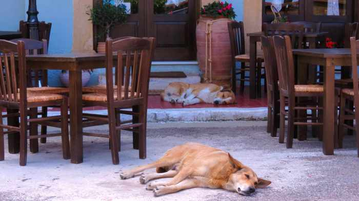 dogs in Kyparissia