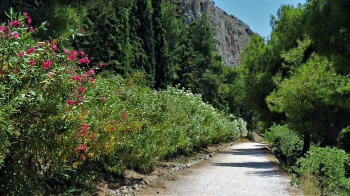 Greece, Peloponnese, Nafplio, Karathona, Karathona path, path, walkway, footpath, trail, trees, foliage
