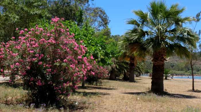 Greece, Peloponnese, Nafplio, Karathona, Karathona beach, beach, trees,