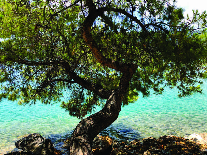 Greece, Greek island, Saronic island, Poros, Poros Greece, Poros island, tree, pine tree, seaside, coast,