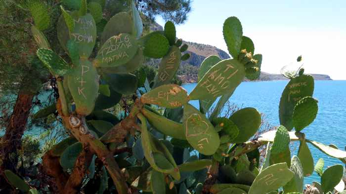 Greece, Peloponnese, Nafplio, Arvanitia, Arvanitia promenade, walkway, path, trail, coast, plants, cactus, graffiti
