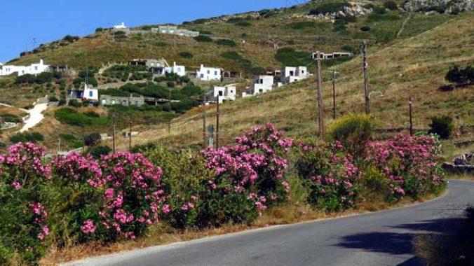 Greece, Greek Islands, Cyclades, Siros, Syros, Syros island, Kini, Kini Bay, Kini Bay Syros, village, street, lane, alley, houses, buildings, azaleas, bushes, flowers,