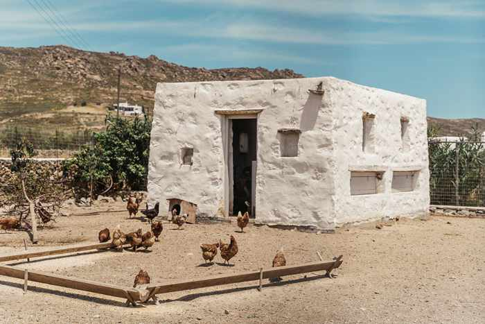 Rizes Folklore Farmstead Mykonos website photo of chickens and the chicken coop
