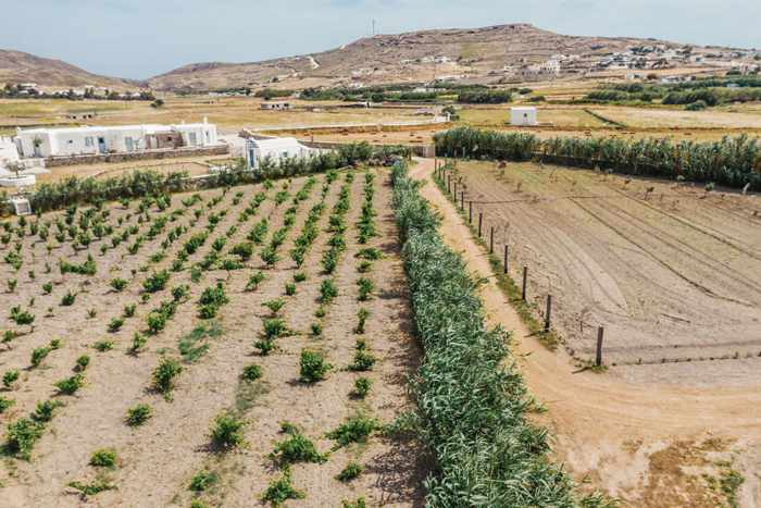 Rizes Folklore Farmstead Mykonos website photo of its vineyard and vegetable gardens
