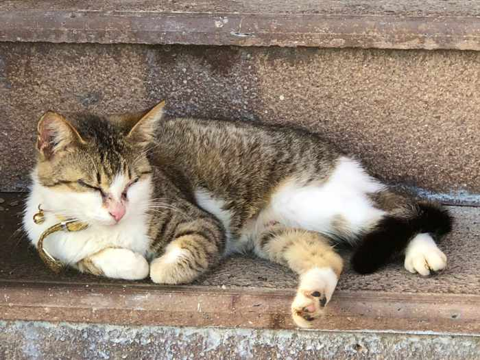 a cat relaxing on steps at Fuga Wine Bar in Molyvos town on Lesvos island