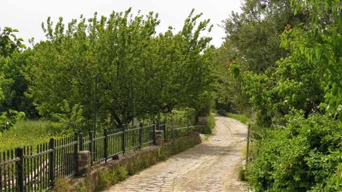 a road on a lush property in Molyvos on Lesvos island
