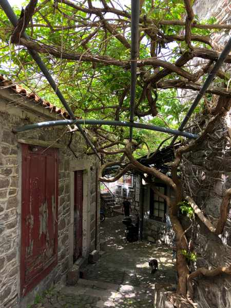 wisteria vines above a lane in the old market of Molyvos on Lesvos island