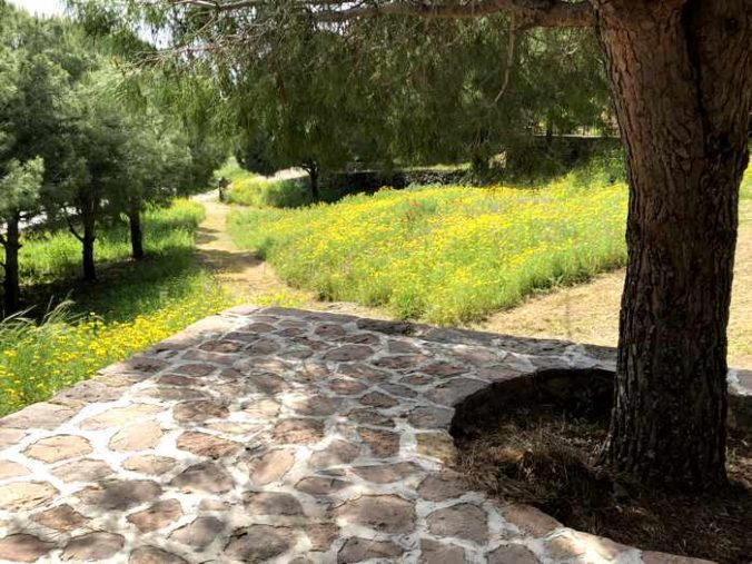 the grounds of Agios Theoktisti Church in Molyvos on Lesvos