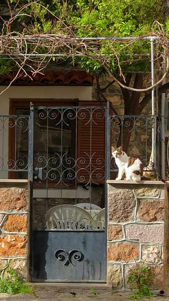 a cat sitting outside a house in Molyvos on Lesvos island
